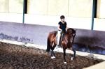 Clinic Working Equitation/Klassieke dressuur in Portugal bij Jose Manuel Correia Lopez